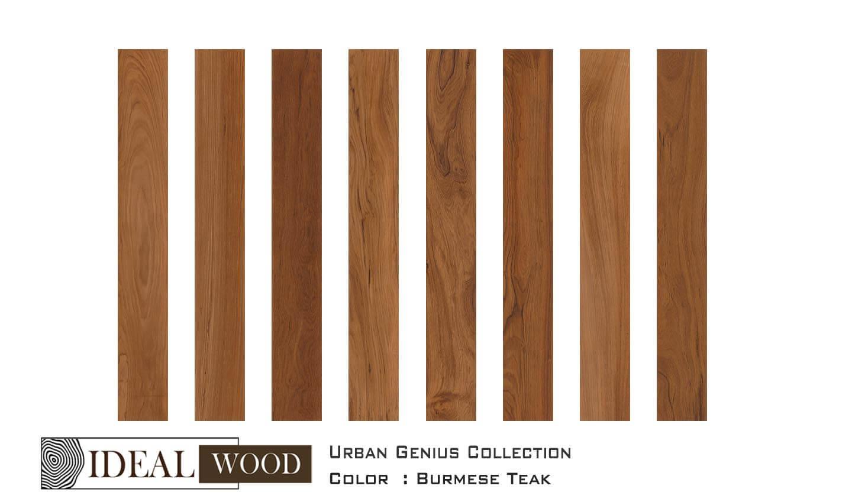 Colour Burmese Teak Ideal Wood